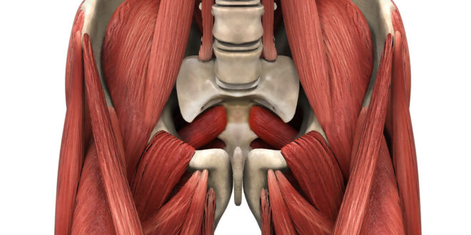 Best of Strength and Conditioning Research in August: Part I, Studies on the Psoas - Just Fly Sports Performance
